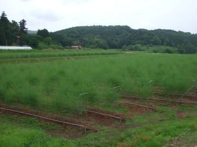農地の年間草刈労賃67500円